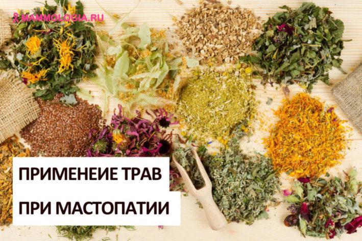 Травы при мастопатии – когда можно обойтись фитотерапией